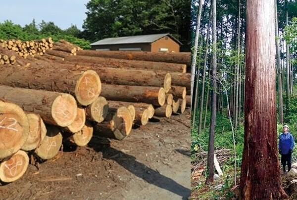 2020/1/25(土) 小田原の森の木 選木体験開催