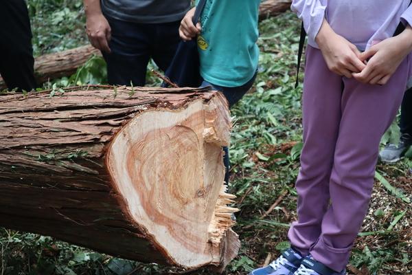 きまつり 森林体験ツアー 令和2年10月3日(土)
